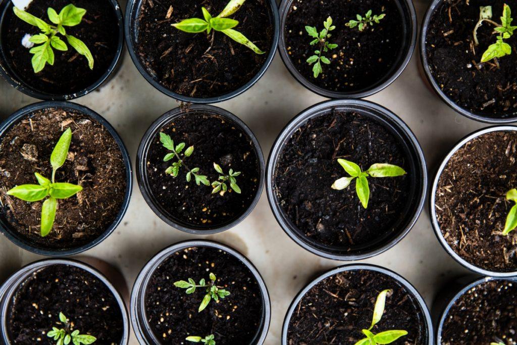 Quarantena #iorestoacasa : giardinaggio